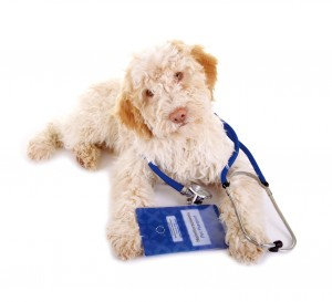 Tierarzt-Hund