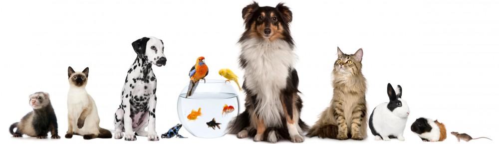Tierarztpraxis Duderstadt